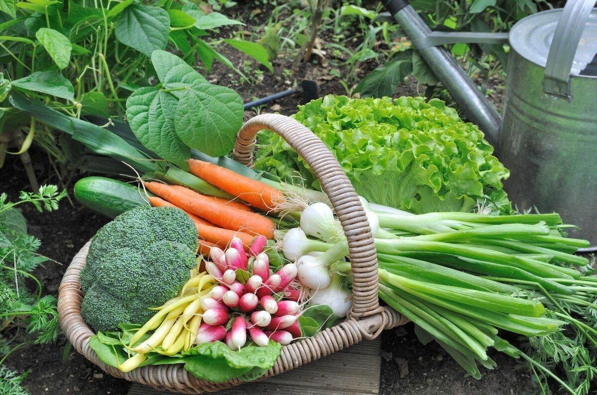Благоприятные дни садовода и огородника на ноябрь 2021