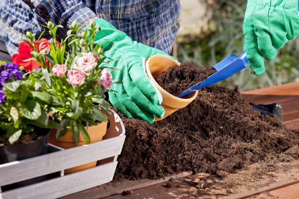 Благоприятные дни для пересадки комнатных растений в октябре 2021