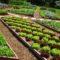 Благоприятные дни садовода и огородника на июнь 2021