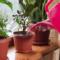 Благоприятные дни для пересадки комнатных растений в сентябре 2021